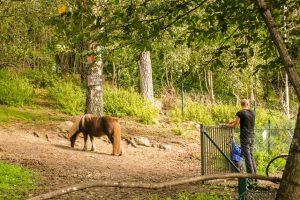6 roliga saker i för barn i Stockholm
